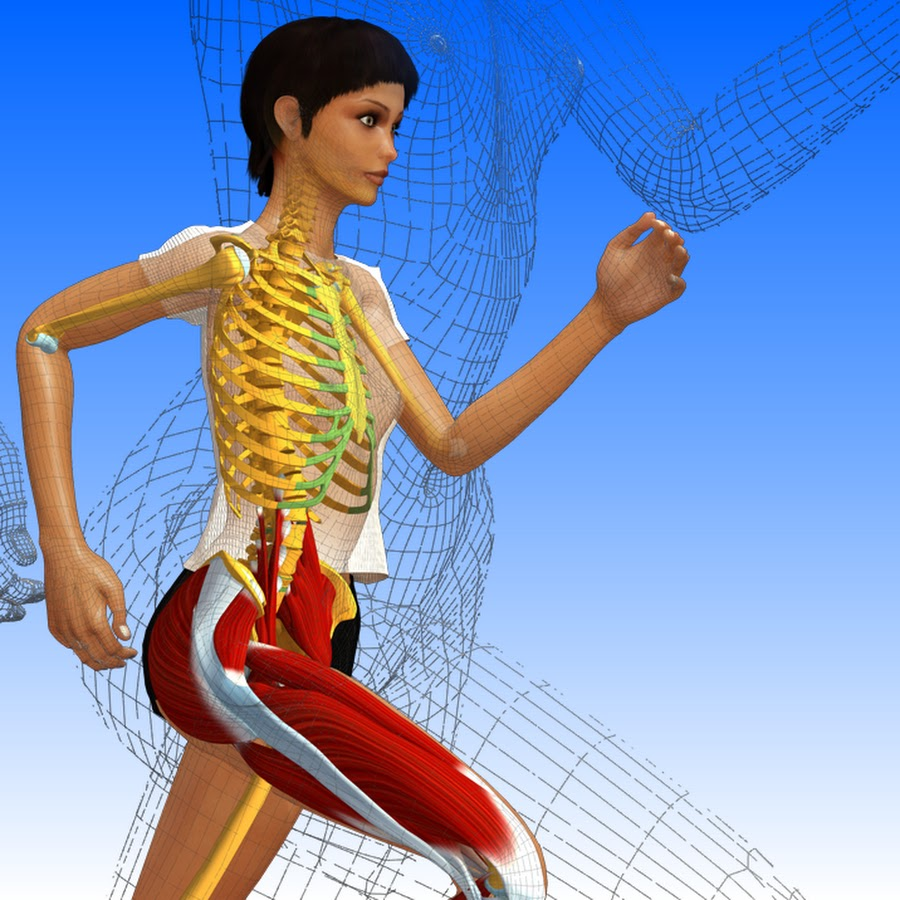 Anatomy in 3d