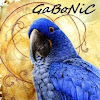Ben Gabonic