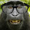 MonkeyKnowsBest