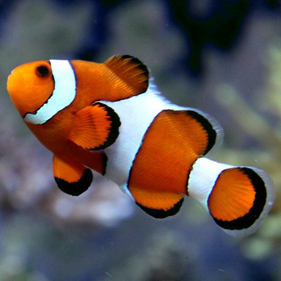 About Us  Clownfish Tattoos Gießen