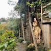 Trang Ngô