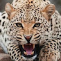 SpiralingLeopard