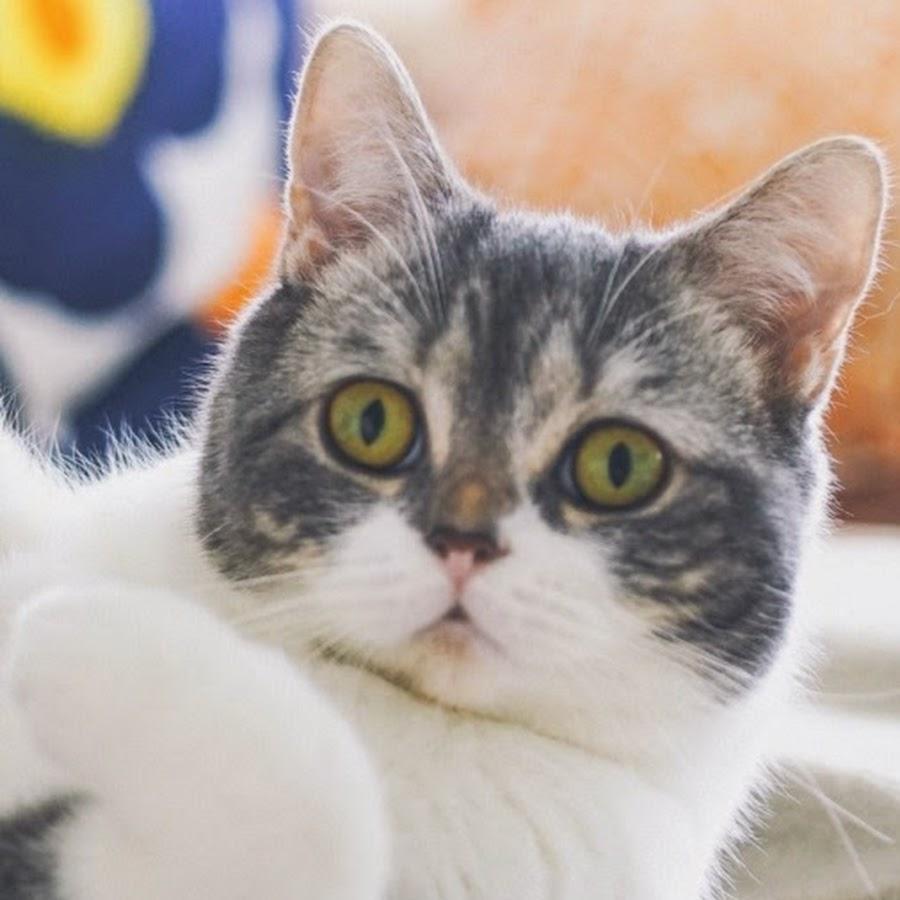Divertenti gatti youtube for Youtube cani e gatti