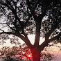 treemeagher