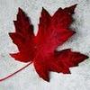 Ai, meu Canadá