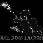 beachdogslax