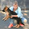 German Shepherd Немецкая овчарка