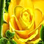 YELLOW ROSE FOR TEXAS: Destruction of the Sun is Done (ED IS DEAD) Photo