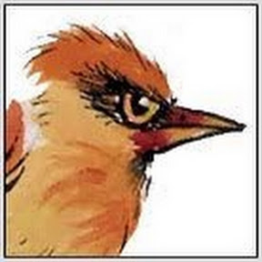 Ragged Bird