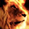 Lion TheFerociousBeats