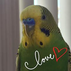 Margo The Parakeet (margo-the-parakeet)