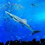 【公式】海洋博公園・沖縄美ら海水族館 の動画、YouTube動画。
