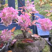 Detlef Römisch Bonsai, Garten und Pflanzenfilme