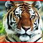 Tiger Pongsakorn