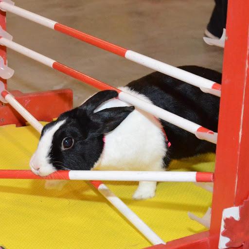 rabbithopping