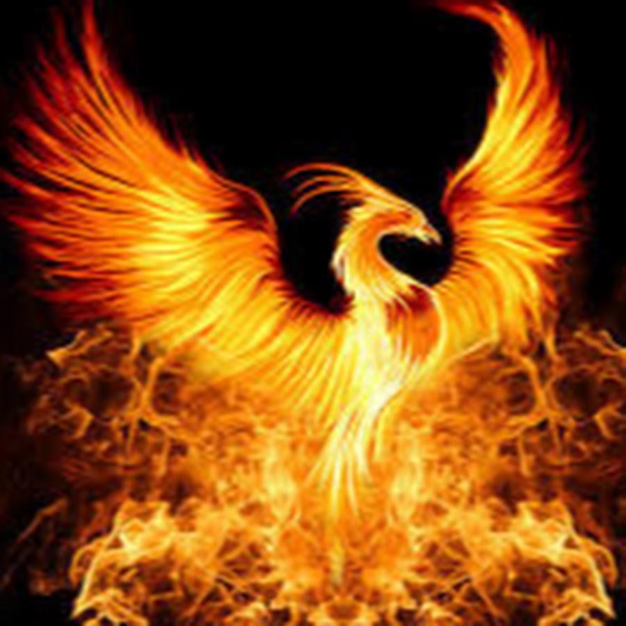 Fenixsani youtube - Fenix bird hd images ...