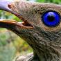 TheBowerbird