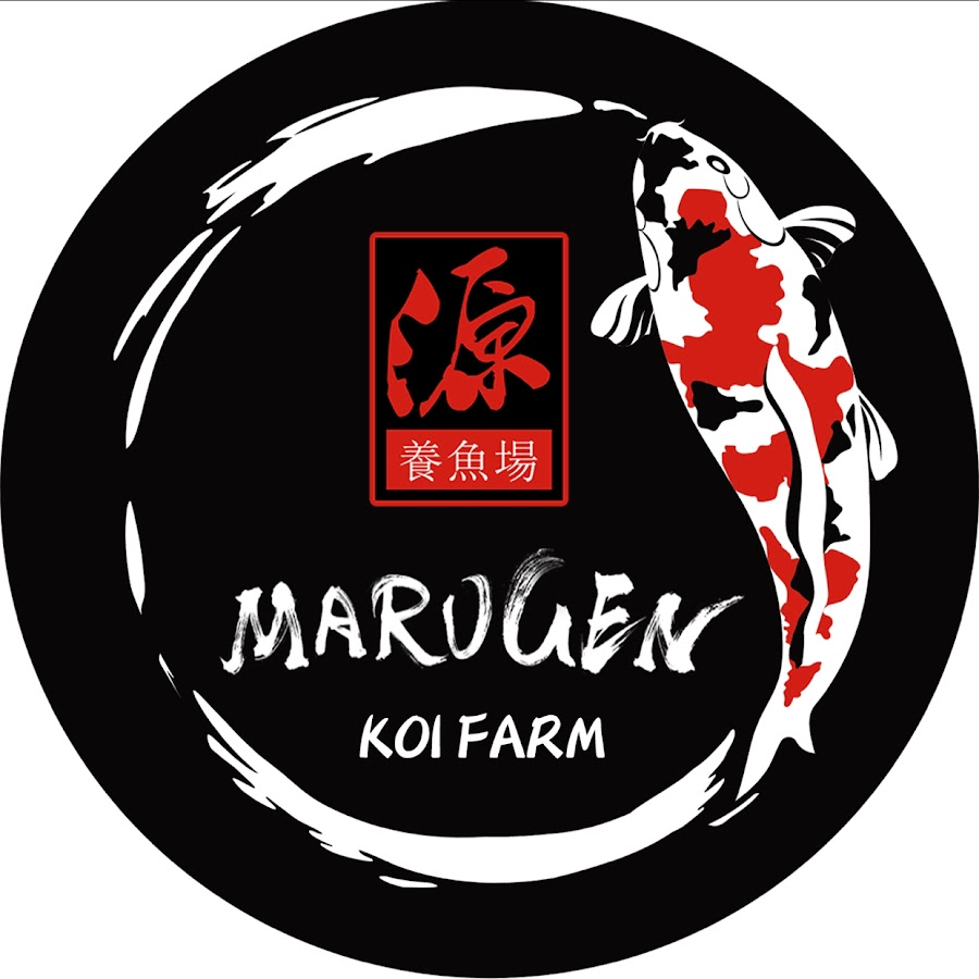 Marugen koi farm japanese koi fish farm offering quality for Japanese koi breeders
