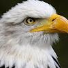 Eagle 1023