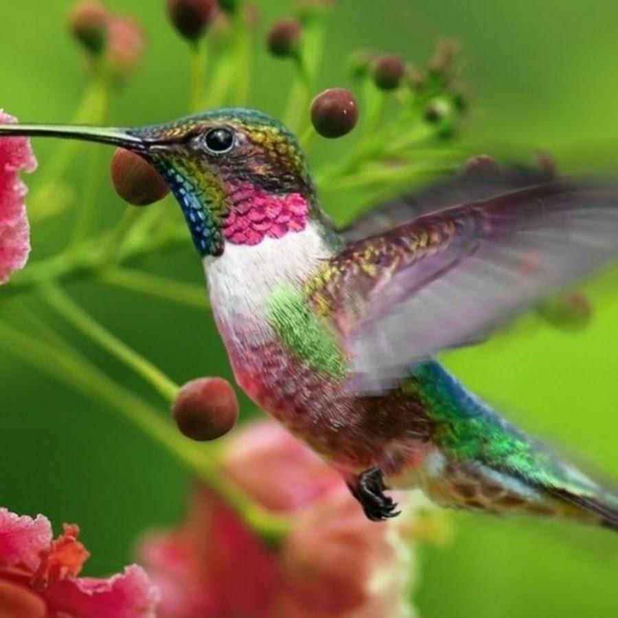 Утренние голоса птиц ивсей природы