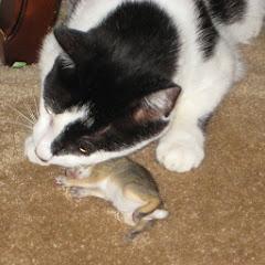 ActionAdventure Kitty