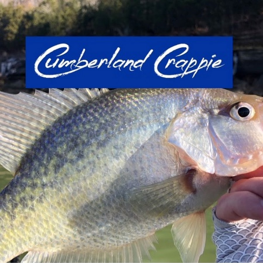 Spider Rigging Double Seat ~ Cumberland crappie youtube
