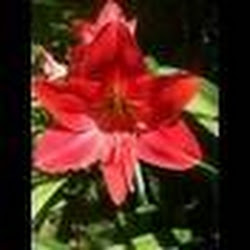 flowernok