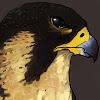 Falconwarzone