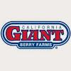 Cal Giant Berries