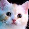 LOVE CAT MAN