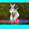 sassycat143Music