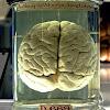 Neurociência Br