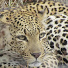 Krugerparksanparks