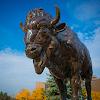 University at Buffalo Admissions