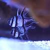 AquariumTV1