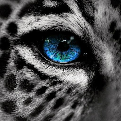 Leopardsclaws