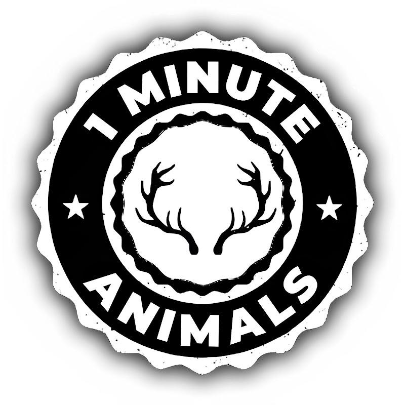 Animal Planet Videos