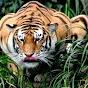 Tigersarewin