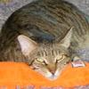 SOS Kitties