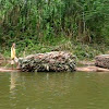 Proyecto Agua Indigena