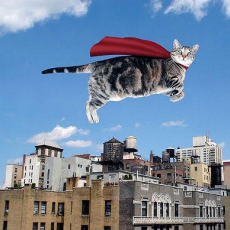Летающий кот - самое интересное в блогах.