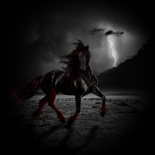thunderheartthehorse