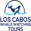 Los Cabos Whale Watching Tours