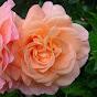 rosegrower