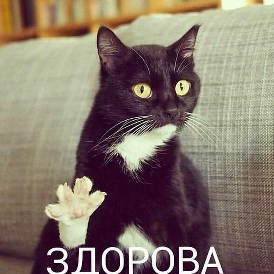 Картинки кошек с надписью привет