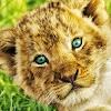Wild Animals Documentary