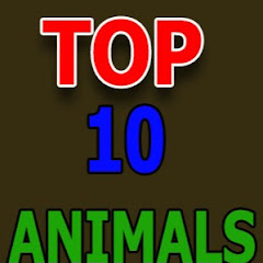 TOP 10 Alnimals