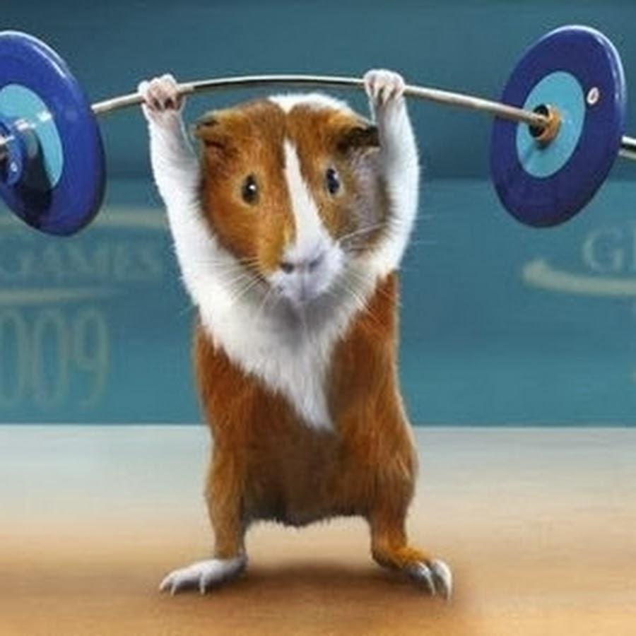 Животные спортсмены