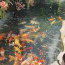 Thùy Dung Nguyễn