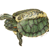 TheTurtlelover09